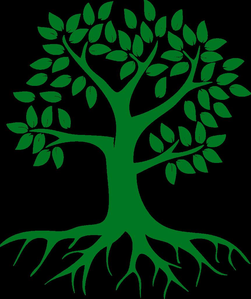 arbre de vie racine